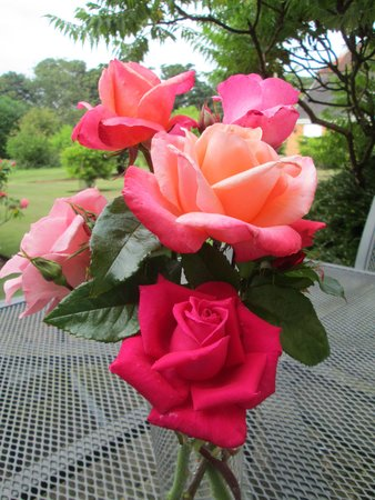 Hintlesham Hall: beautiful roses right out side our door