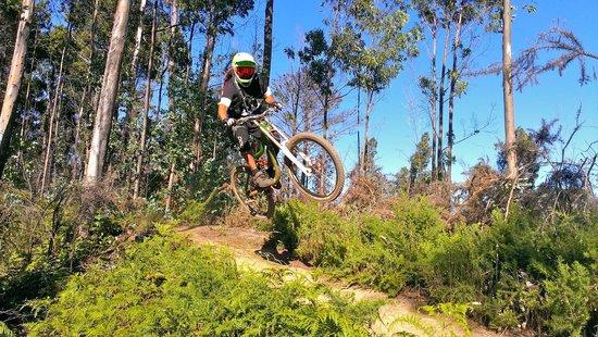 Bikulture: Downhill