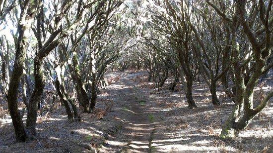 Bikulture: Trail