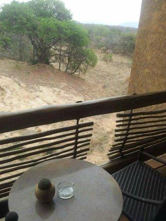 Kapama River Lodge: Vista da varanda do apartamento