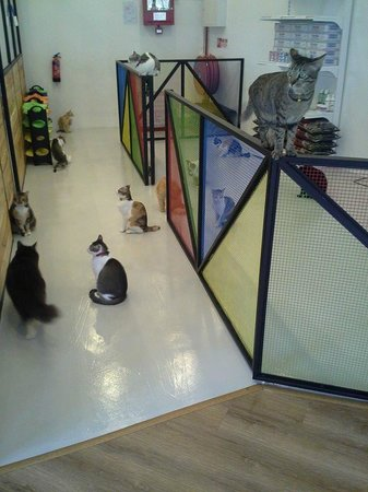 The Cat Cafe: greedy kitties awaiting their food