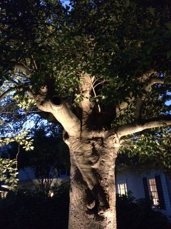 Inn at Perry Cabin by Belmond : lit tree at night