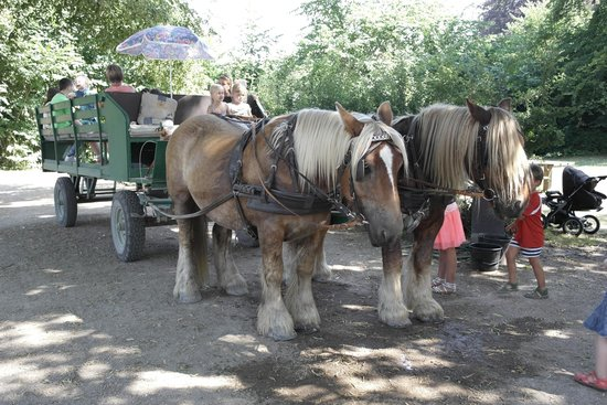 The Open Air Museum: Horse drawn carriage rides available