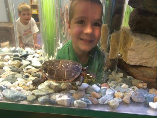ECHO Leahy Center for Lake Champlain: A turtle's view.