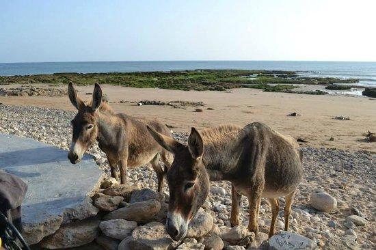 Riad Baoussala: Tagenza beach - Chez Abdou. Donkeys!