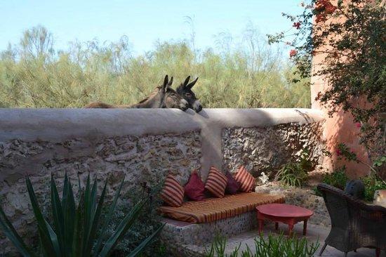 Riad Baoussala: Donkeys coming to say hi at breakfast