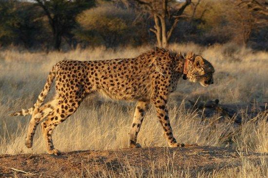 Okonjima Bush Camp : Spirit takes a stretch