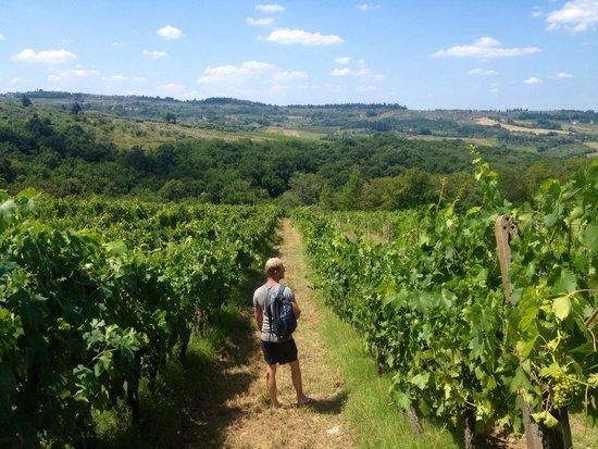 Villa Talente: Vineyards of the villa