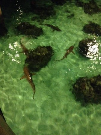 Toatea Creperie & Bar: Sharks and sting rays looking for their dinner
