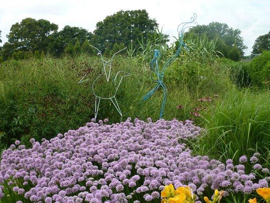 Sussex Prairies Garden: Allium
