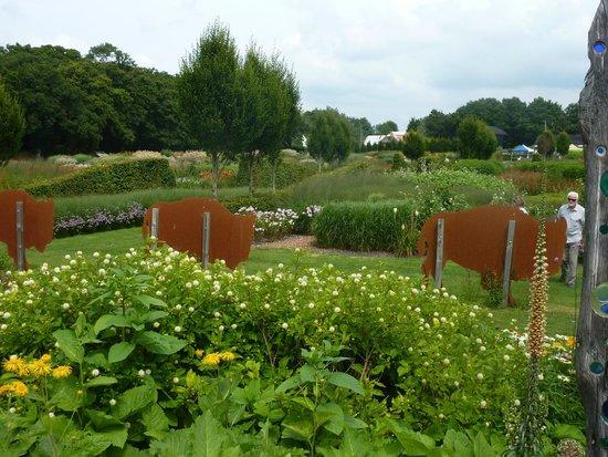 Sussex Prairies Garden: Buffalo