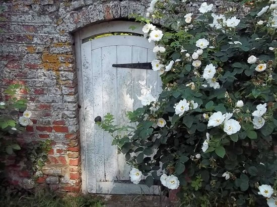 The Abbey Bed and Breakfast: Roses on a Medieval wall