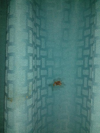 Quality Inn: The squished bug in the curtains