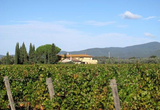 Batzella Winery