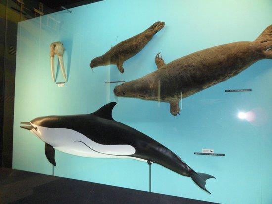 Akwarium Gdynskie MIR: w muzeum