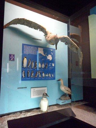Akwarium Gdynskie MIR: wystawa