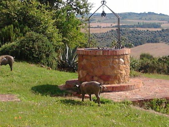 Agriturismo Lucignanello: chi fa la guardia..