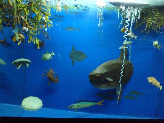 Akwarium Gdynskie MIR: wystawa1