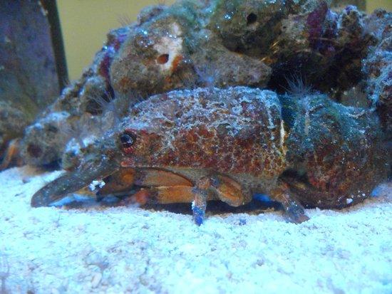 Akwarium Gdynskie MIR: akwarium