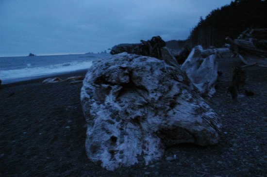 Manitou Lodge Bed and Breakfast : Rialto Beach...of Twilight fame