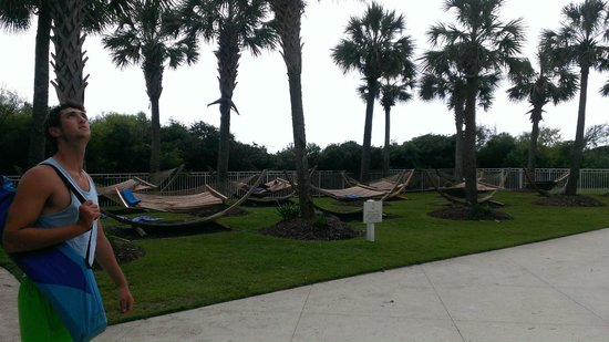 Myrtle Beach Marriott Resort & Spa at Grande Dunes : Hammocks