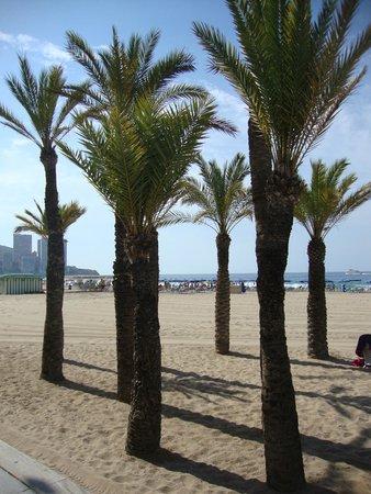 Levante Beach: 1