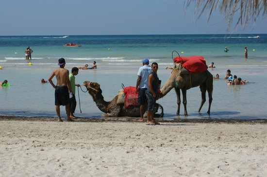 SprinClub Djerba Golf & Spa: Beach area