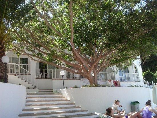 Portinatx Beach Club Hotel: una delle scalinata della piscina
