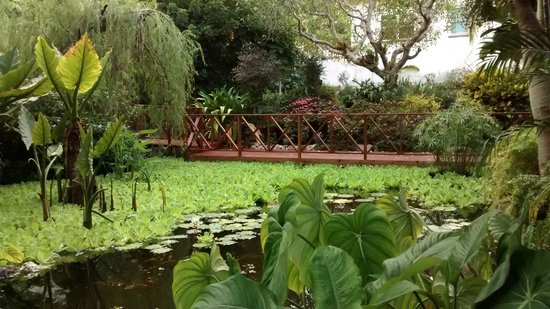 Andromeda Botanic Gardens: Relax by the pool, watch the hummingbirds and dragonflies.