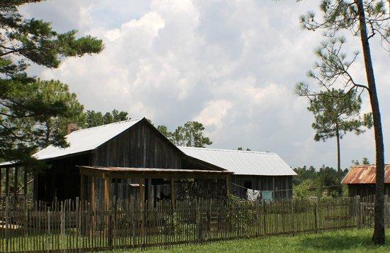 Florida Agricultural Museum : Florida Agriculture Museum