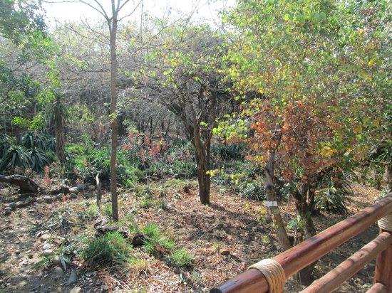 Shayamoya Tiger Fishing & Game Lodge: beautiful gardens