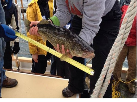 Inland Seas Education Association: One of the fish caught in the Trawl Net