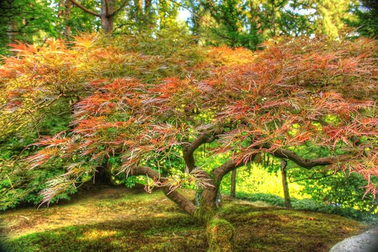 Portland Japanese Garden: In the Japanese Gardens - Portland