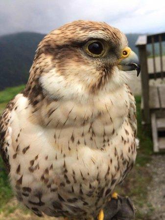 The Raptors : Hawk