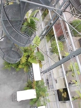 Botanical Gardens (Hortus Botanicus): one of the ways to get to the top floor