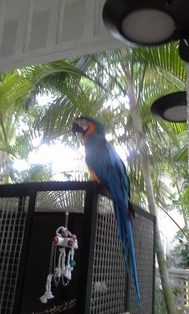Hyatt Centric Key West Resort and Spa: Odie the Parrot