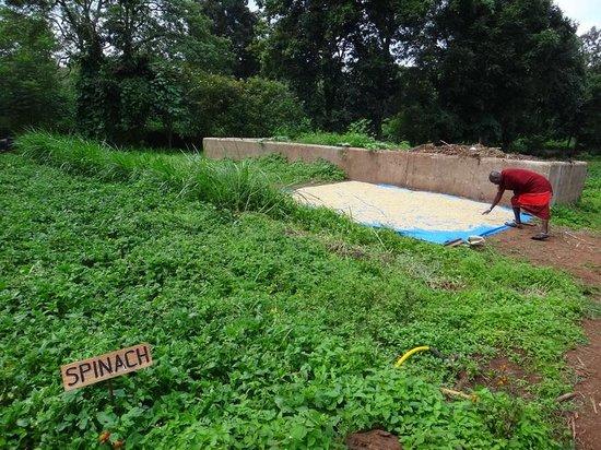 Gibb's Farm : ホテルの料理には敷地内でできたオーガニック野菜が使われる