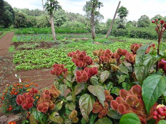 Gibb's Farm : 美しい花や畑