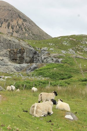Highland Experience Inverness - Day Tours: highlands Skye