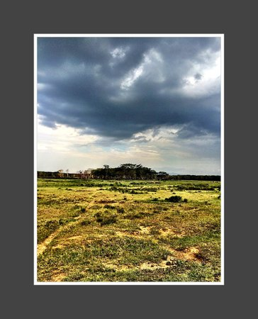 Sarova Lion Hill Game Lodge: View from safari
