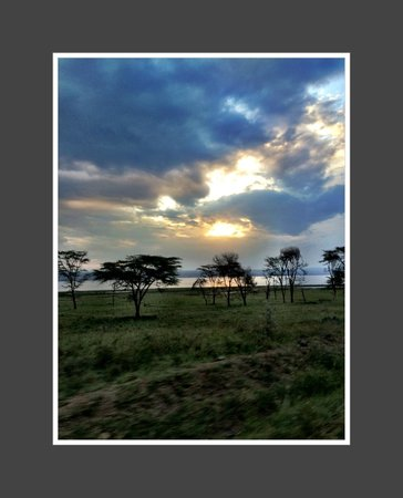 Sarova Lion Hill Game Lodge: and yet another