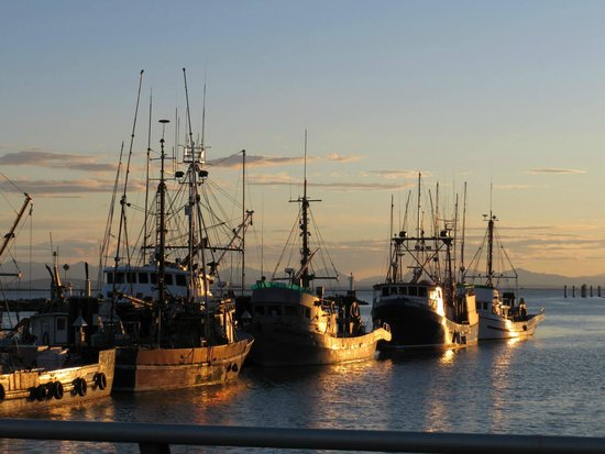 Steveston Heritage Fishing Village: A view of the fishing boats at Steveston