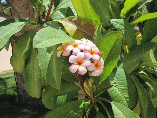 Sonesta Club : Garden flower