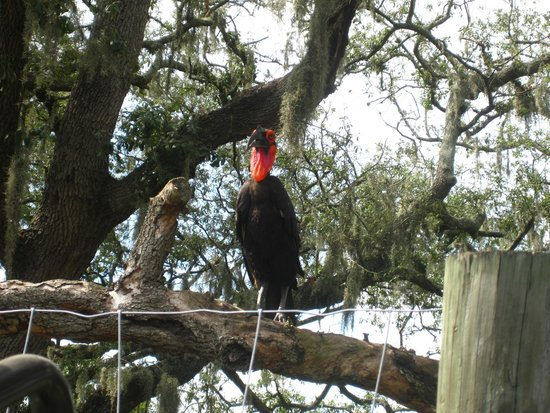 """Tampa's Lowry Park Zoo: Expedition Africa Guided """"Safari"""""""