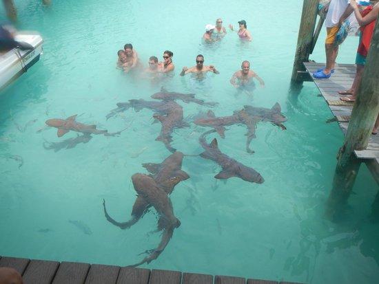 Fowl Cay Resort : Compass Cay Marina