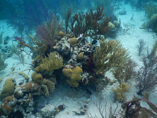 Fowl Cay Resort : Snorkeling in the Exumas