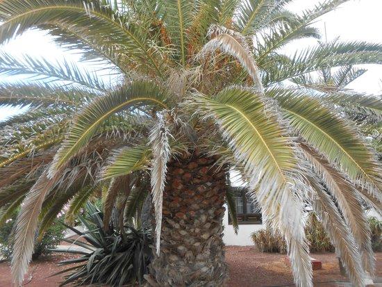 Hotel Río Playa Blanca: jardin
