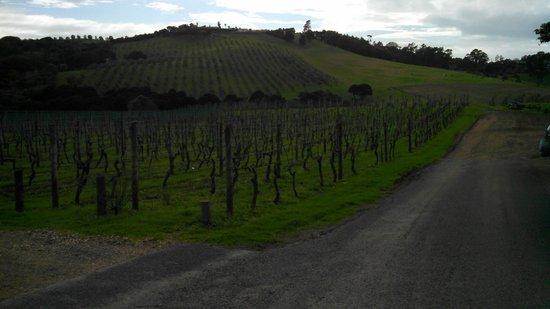 Waiheke Island Wine Tours: Vineyard