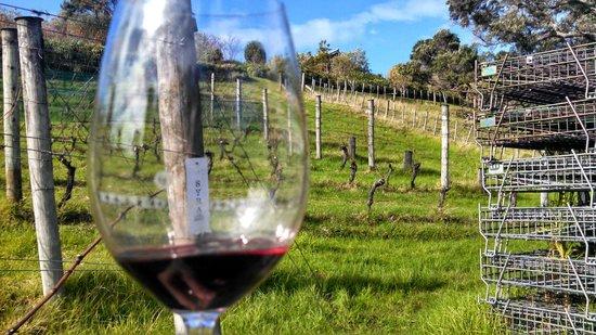Waiheke Island Wine Tours: Tasting and touring