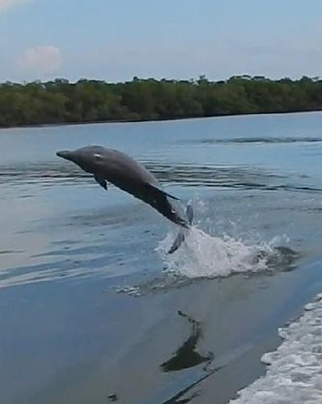 Good Time Charters and Tours : One of MANY aquatic acrobats